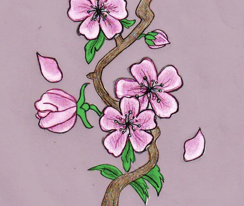 Cherry Tree Tattoo Drawings