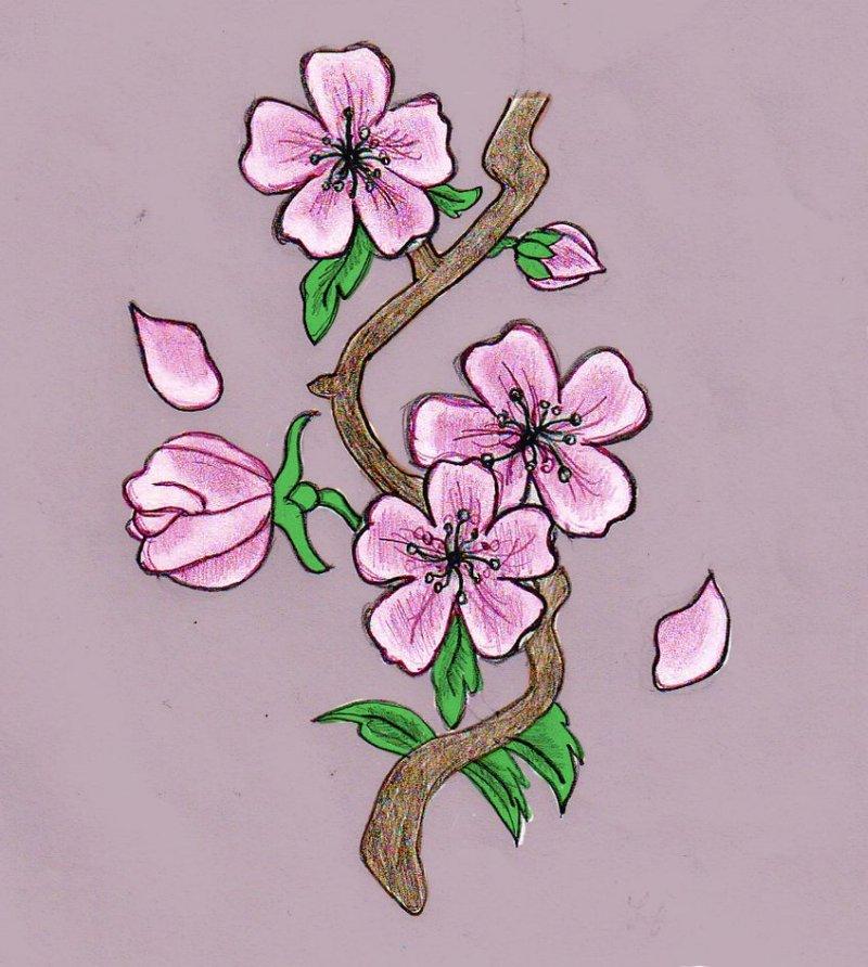 Cherry Tree Tattoo Drawings