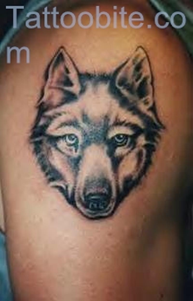 Steady Look – Wolf Tattoo