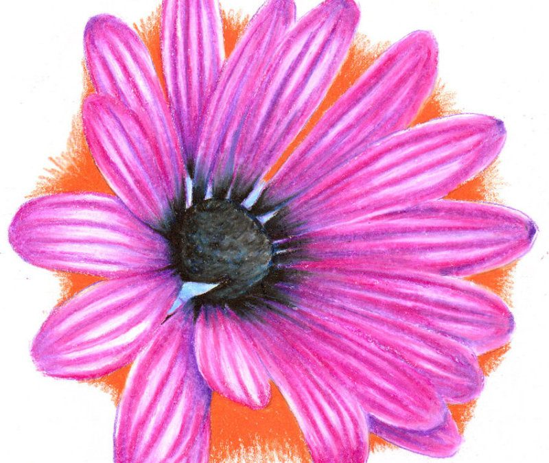 African daisy tattoo design