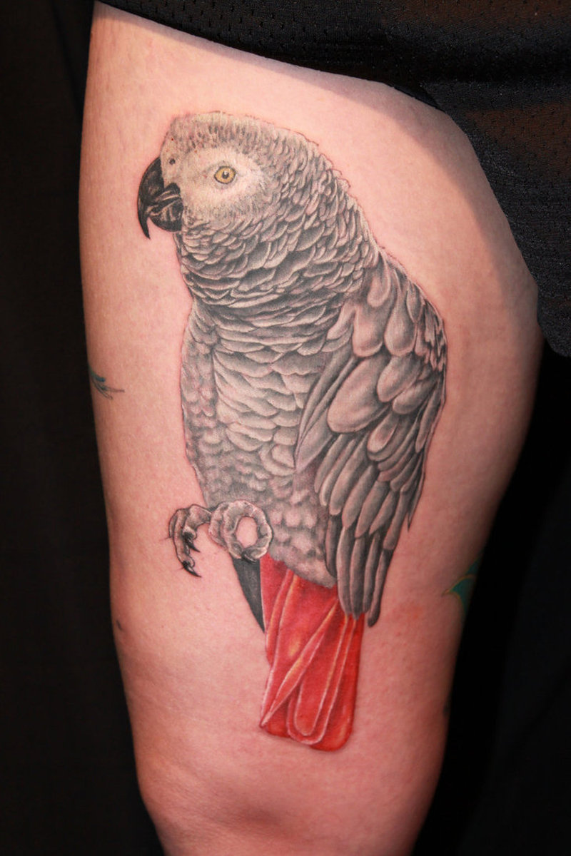 African grey parrot tattoo on thigh