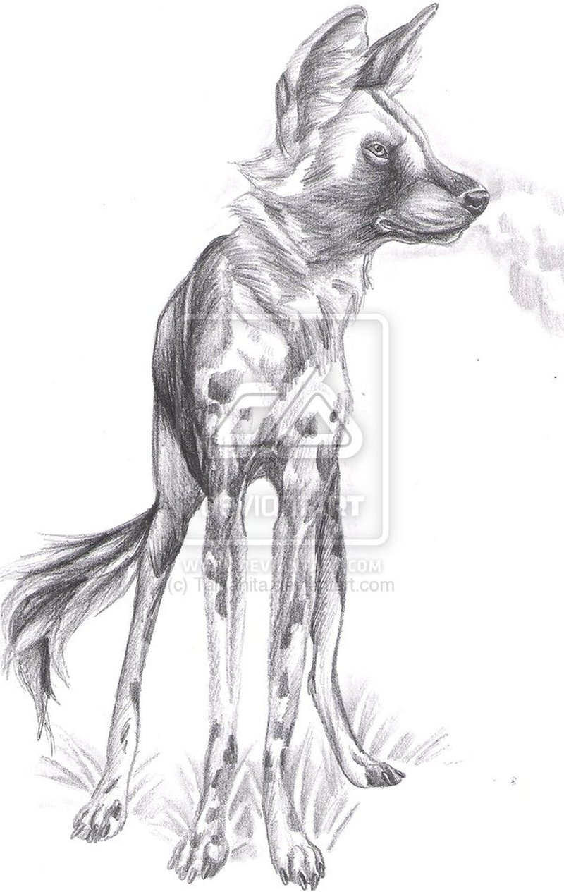 African wild dog sketch tattoo