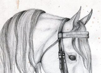 Arabian horse head tattoo