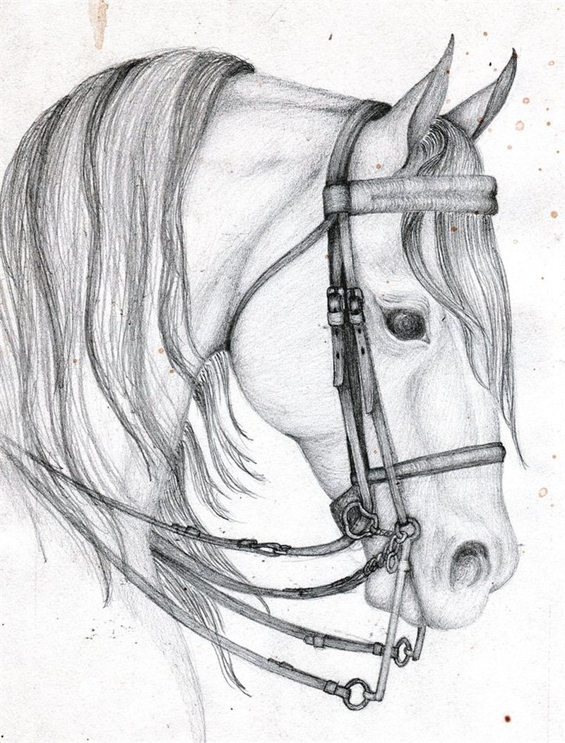 Arab Horse Head Tattoo Design Tattoos Book 65 000 Tattoos Designs