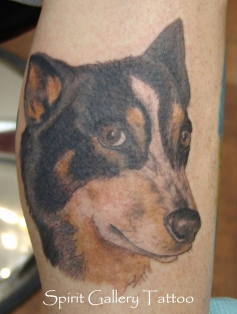 Australian cattle dog portrait tattoo on calf