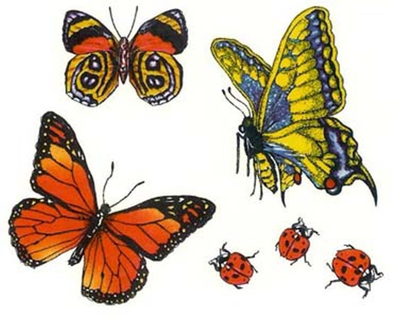 Beautiful butterflies samples tattoo