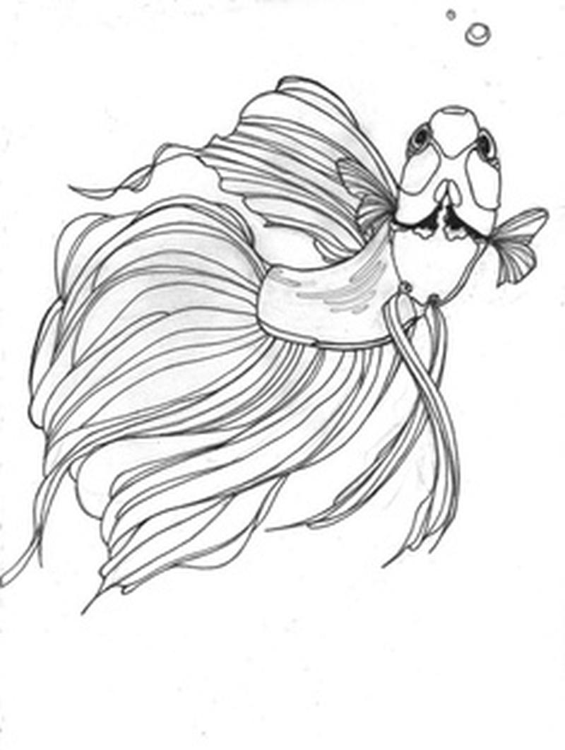 Betta fish tattoo sample