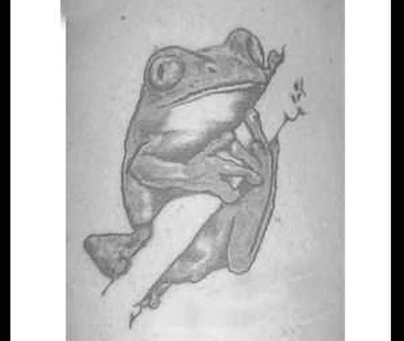 Black nd white frog tattoo
