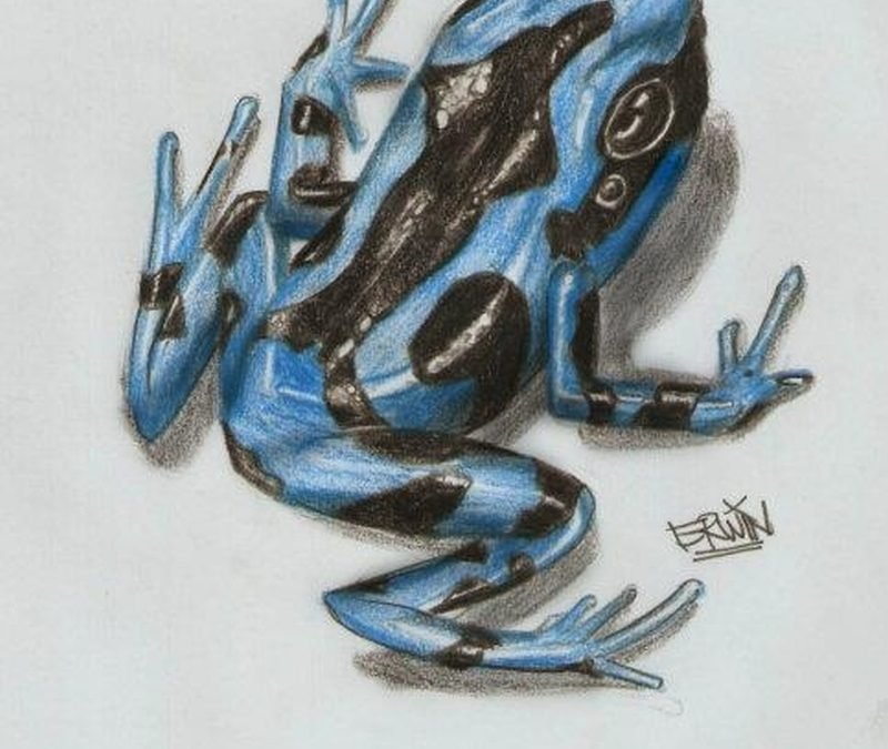 Blue dart frog tattoo design 2