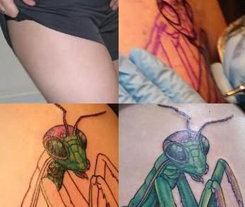 Bug tattoo stages