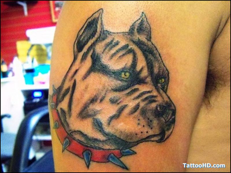 Bull dog head tattoo on biceps