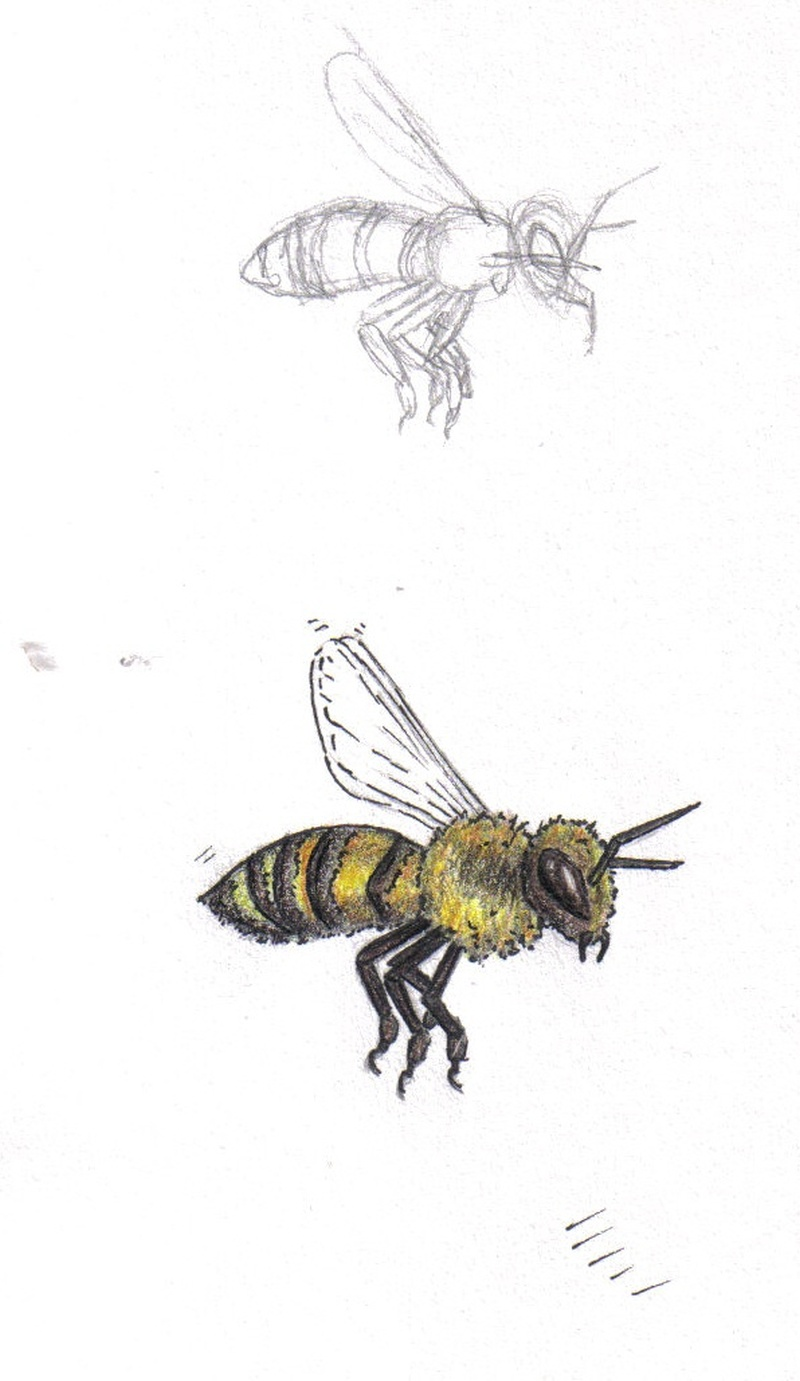 Bumblebee tattoo designs