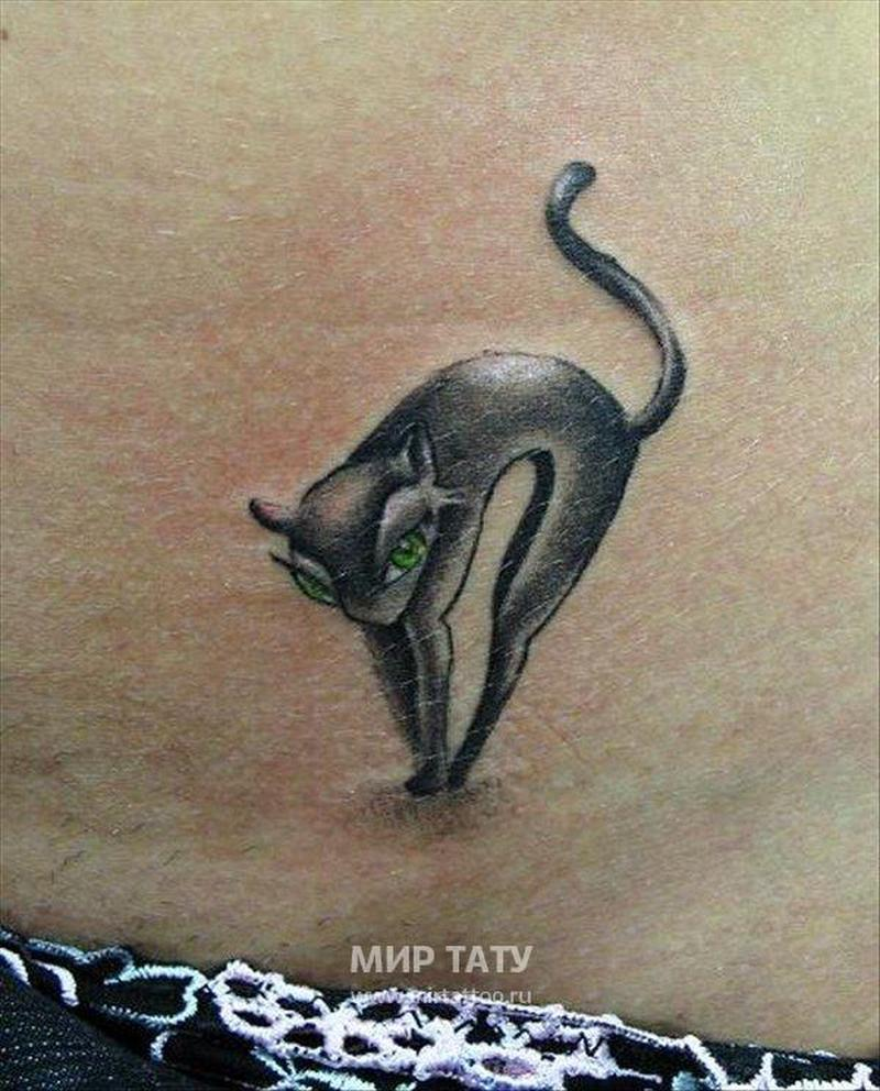 Cat tattoo with green eyes