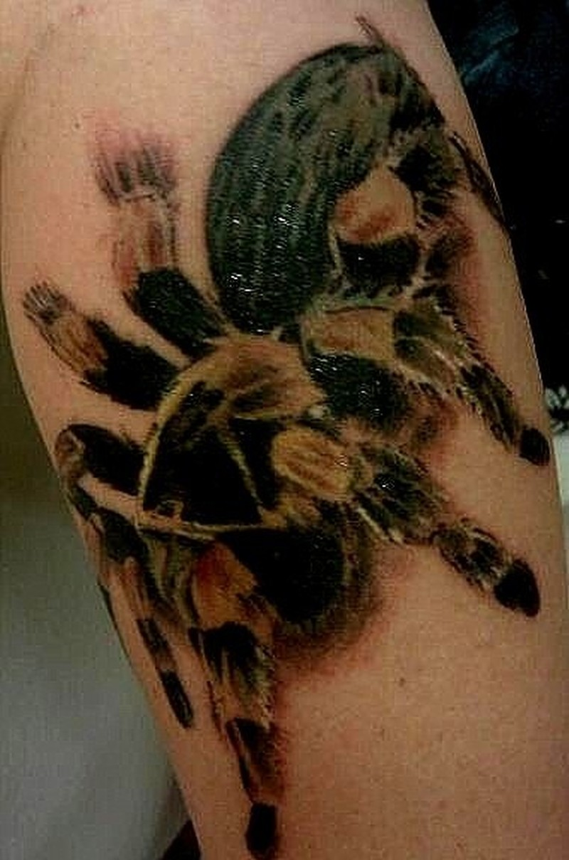 Colorful tarantula spider tattoo