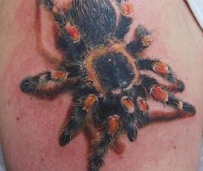 Coloured tarantula spider tattoo