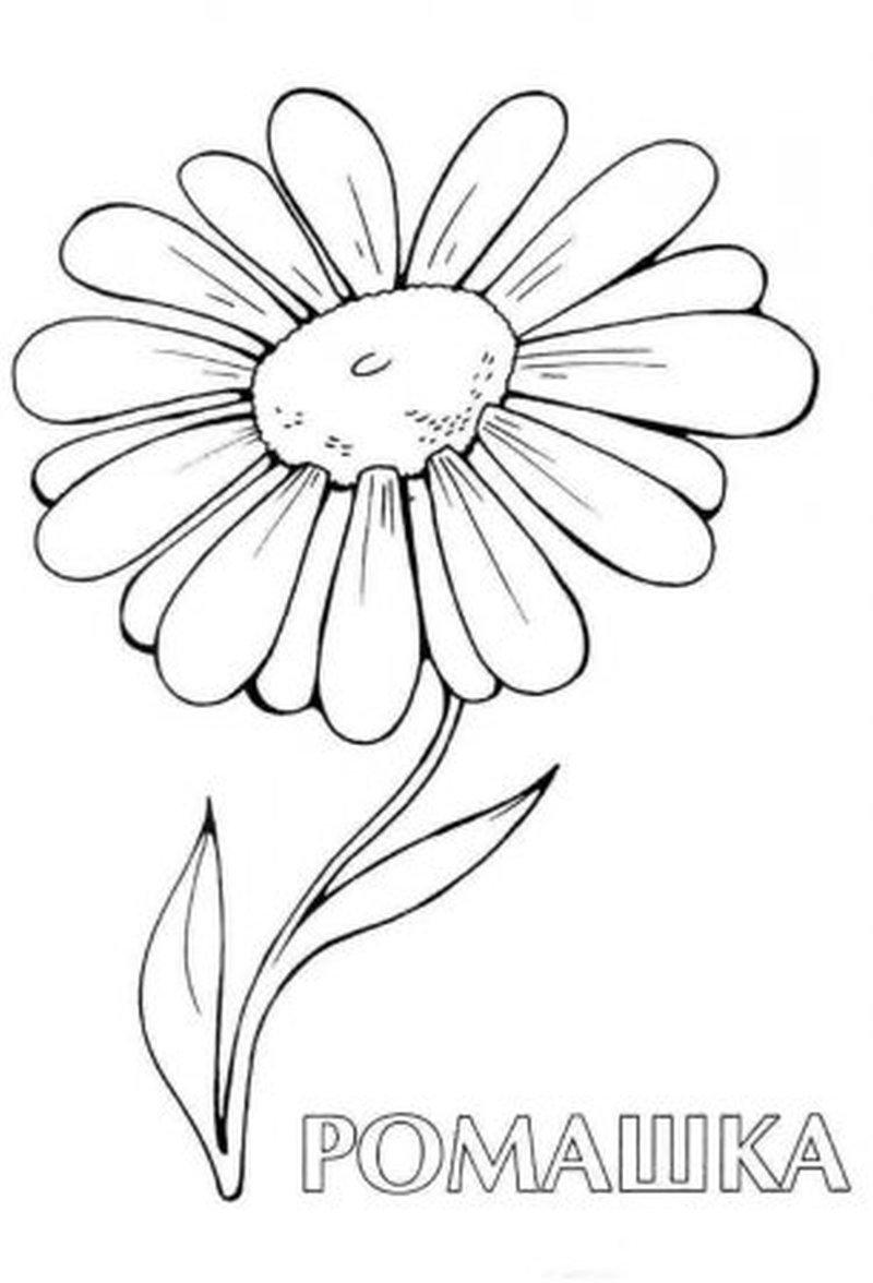 Daisy Flower Tattoo Sample Tattoos Book 65000 Tattoos Designs