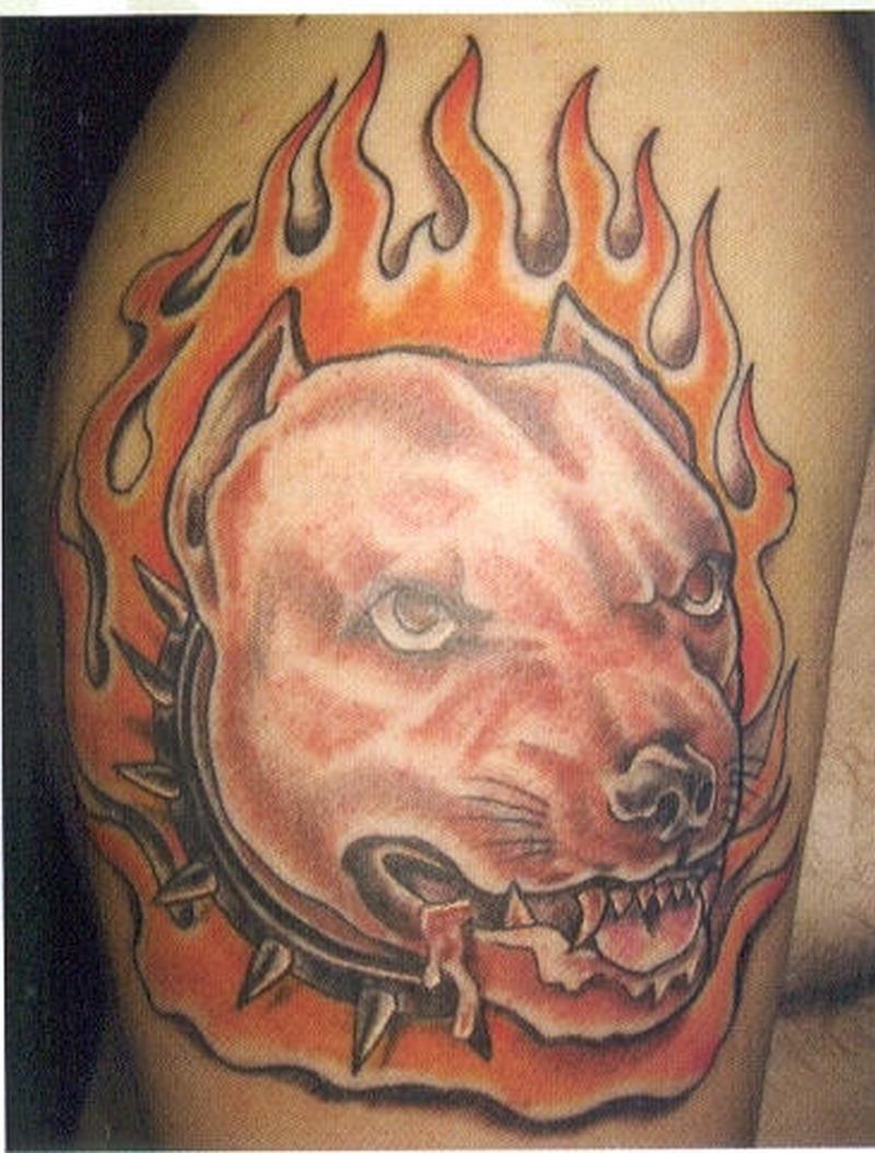 Dog fire n flame tattoo on biceps