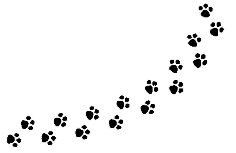 Paws Dog Walking