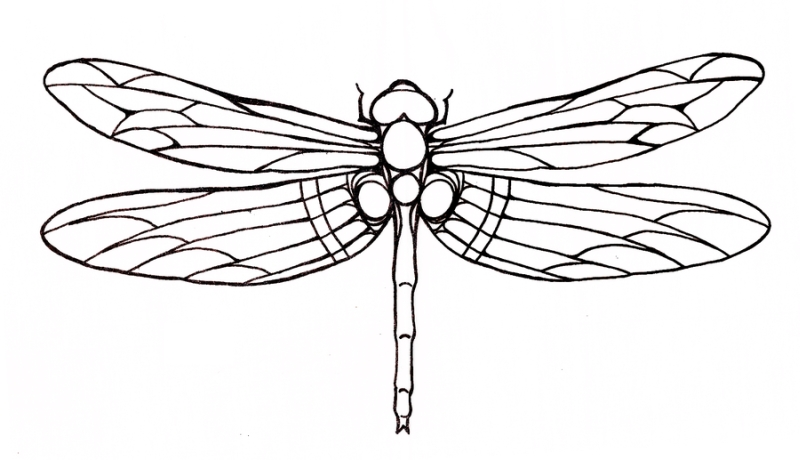Dragonfly tattoo sample