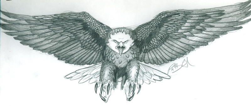 Eagle tattoo drawing