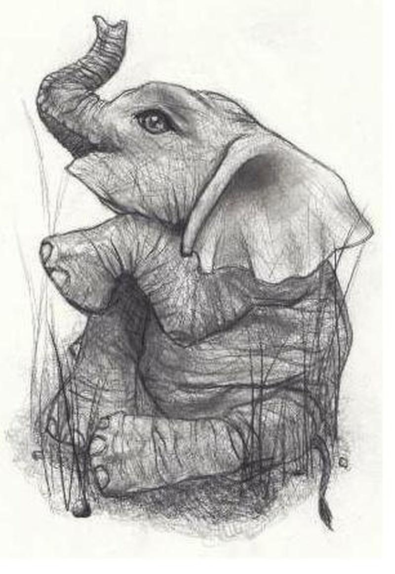 Elephant tattoo drawing 2