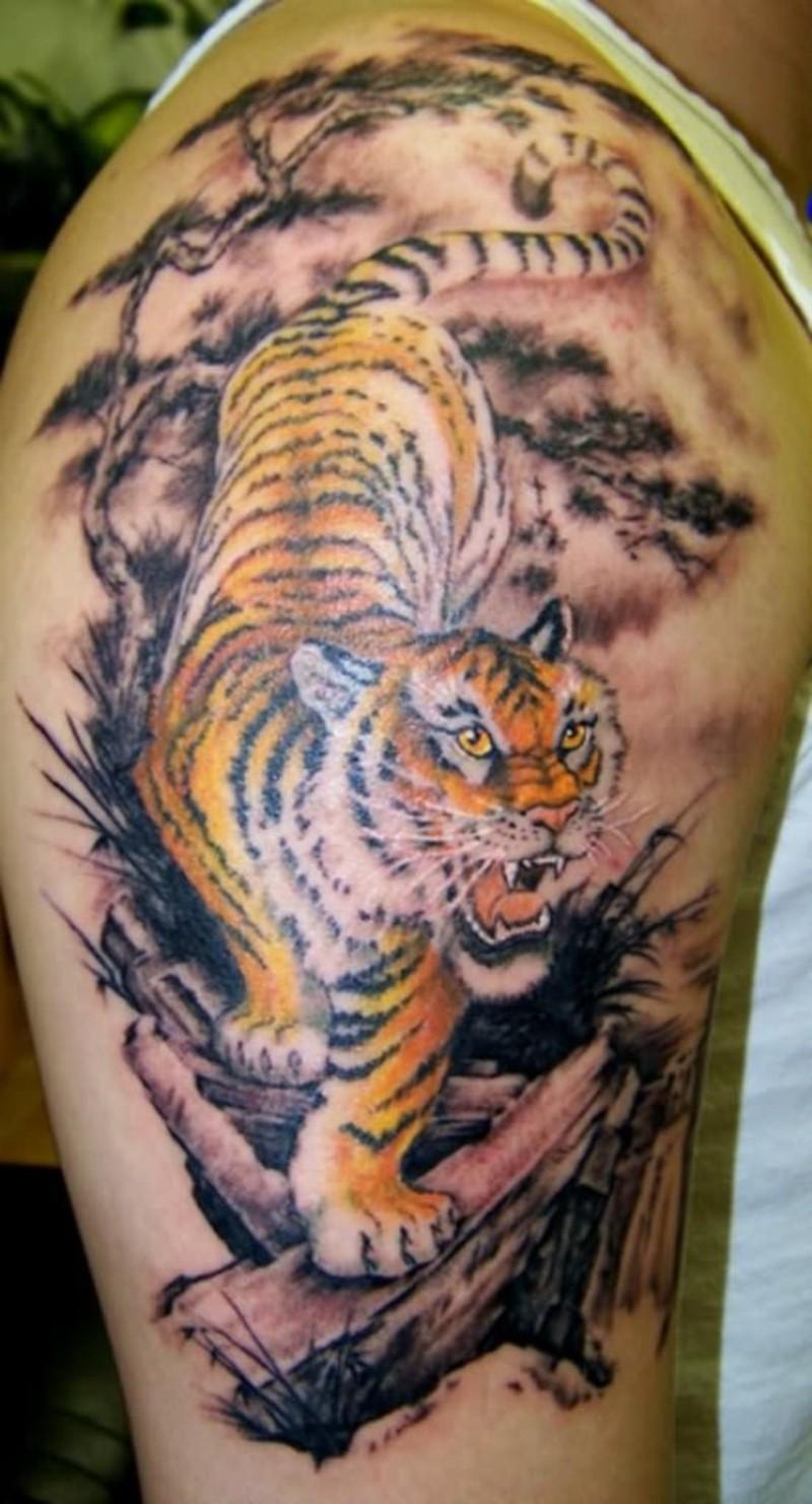 Тату тигр на плече мужские