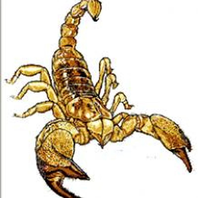 Scorpion insect tattoo design 3
