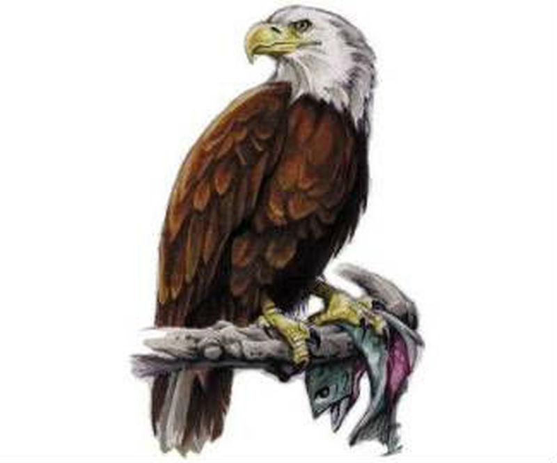 Sitting eagle tattoo design