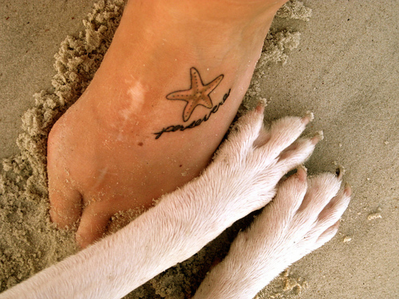 66f9ec89321d1 Small star fish tattoo on foot - Tattoos Book - 65.000 Tattoos Designs