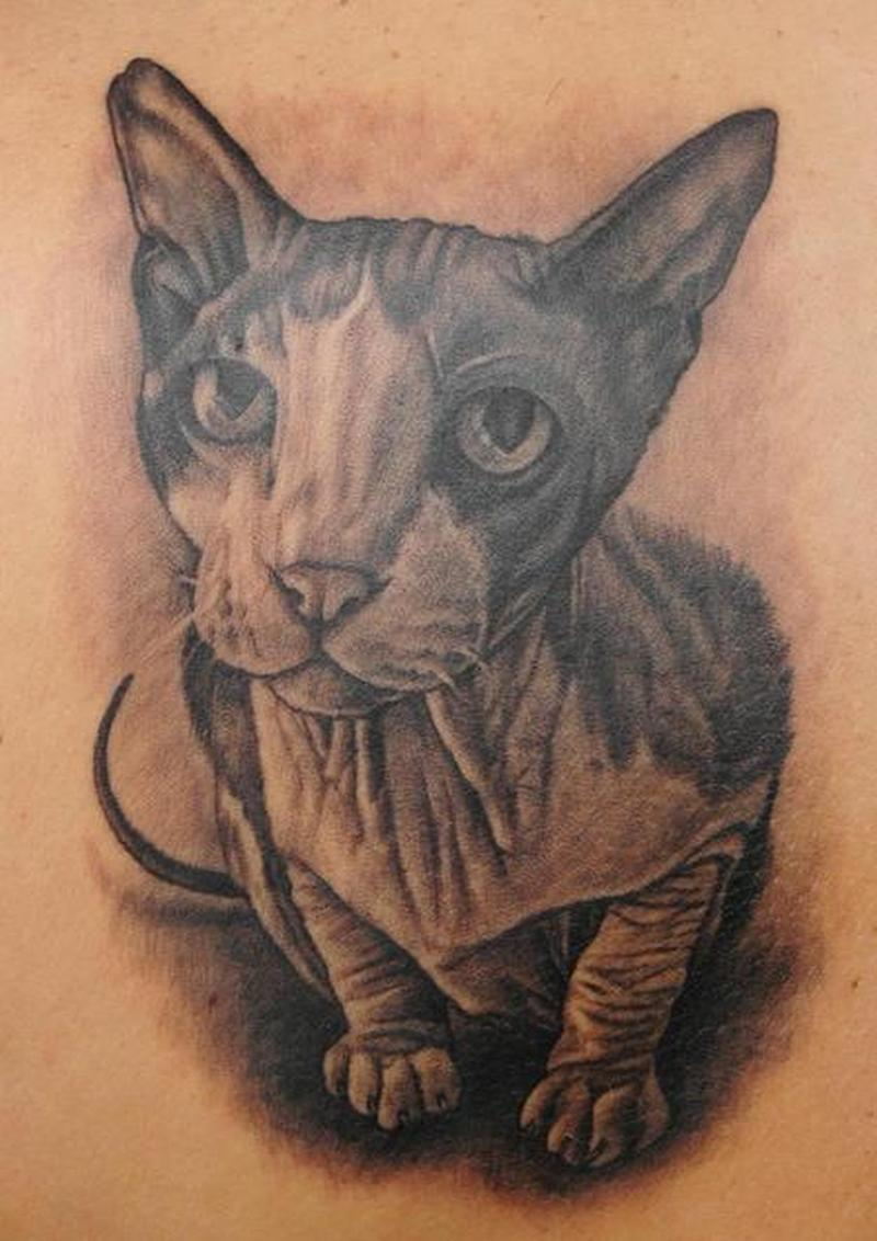 Sphynx cat tattoo design