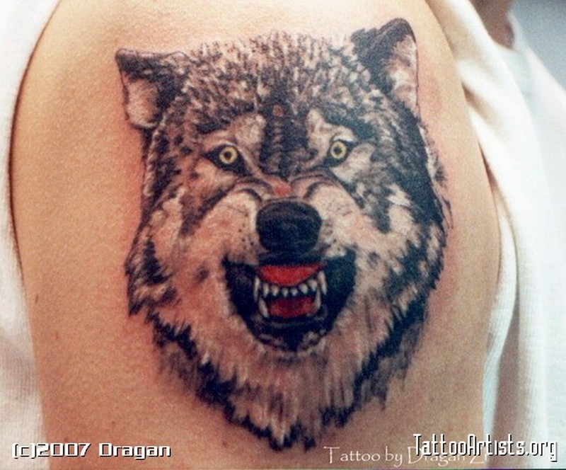 Superb wolf face biceps tattoo