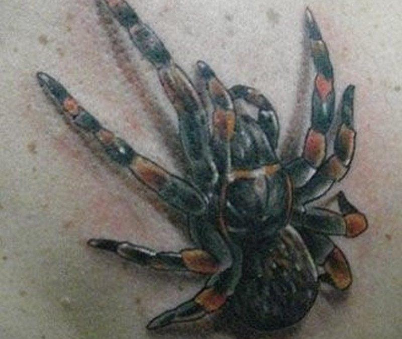 Tarantula spider tattoo on back