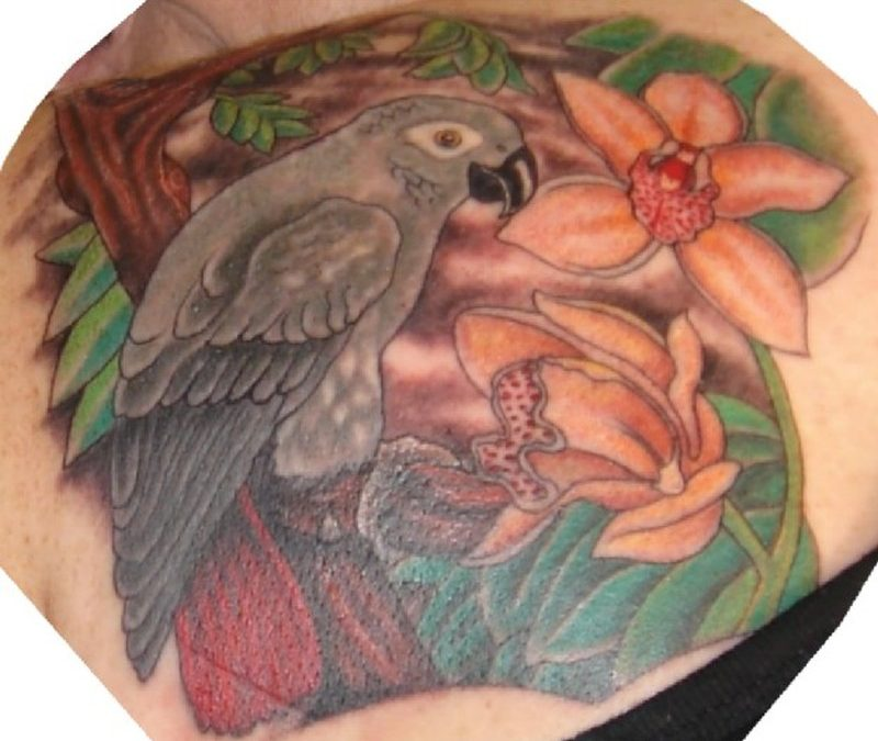 African grey parrot with orchards tattoo