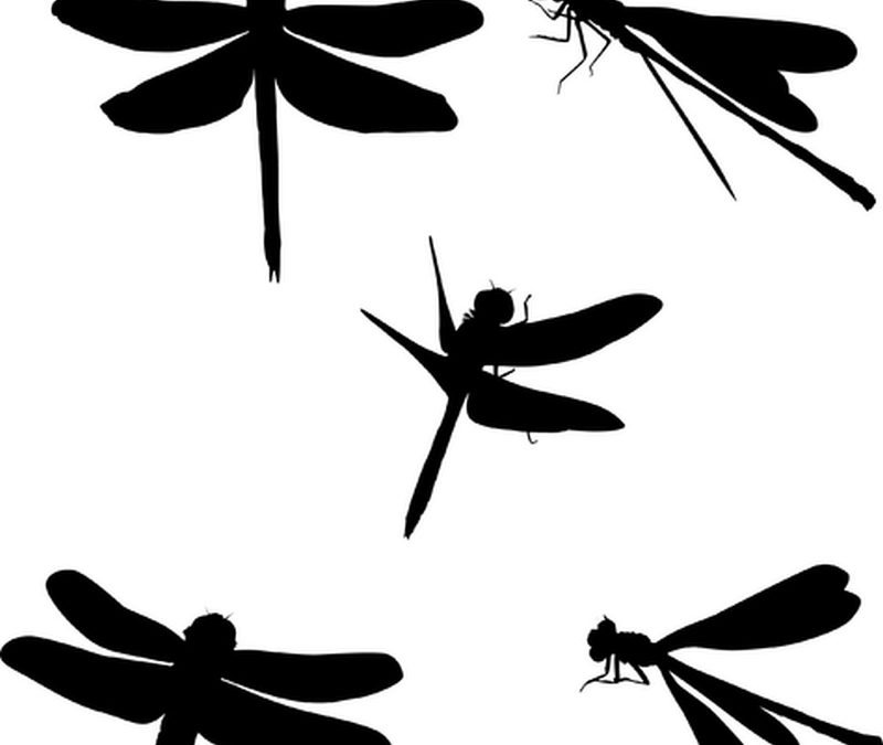 Black dragonfly tattoo set