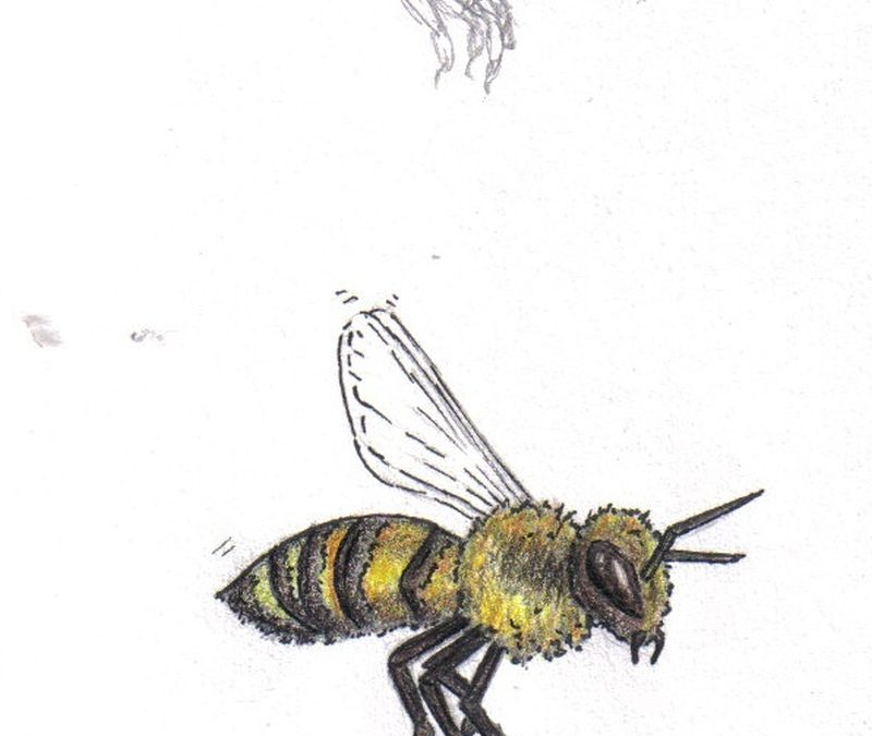 Bumblebee tattoo designs
