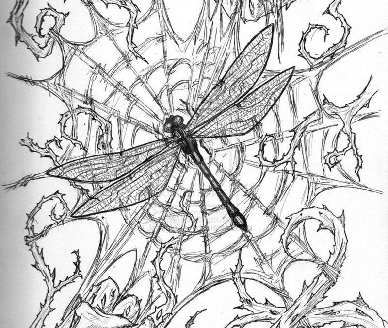 Dragonfly n spider web tattoo sketch