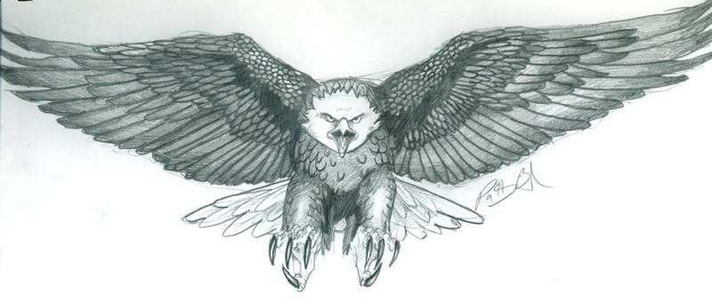 Eagle tattoo drawing