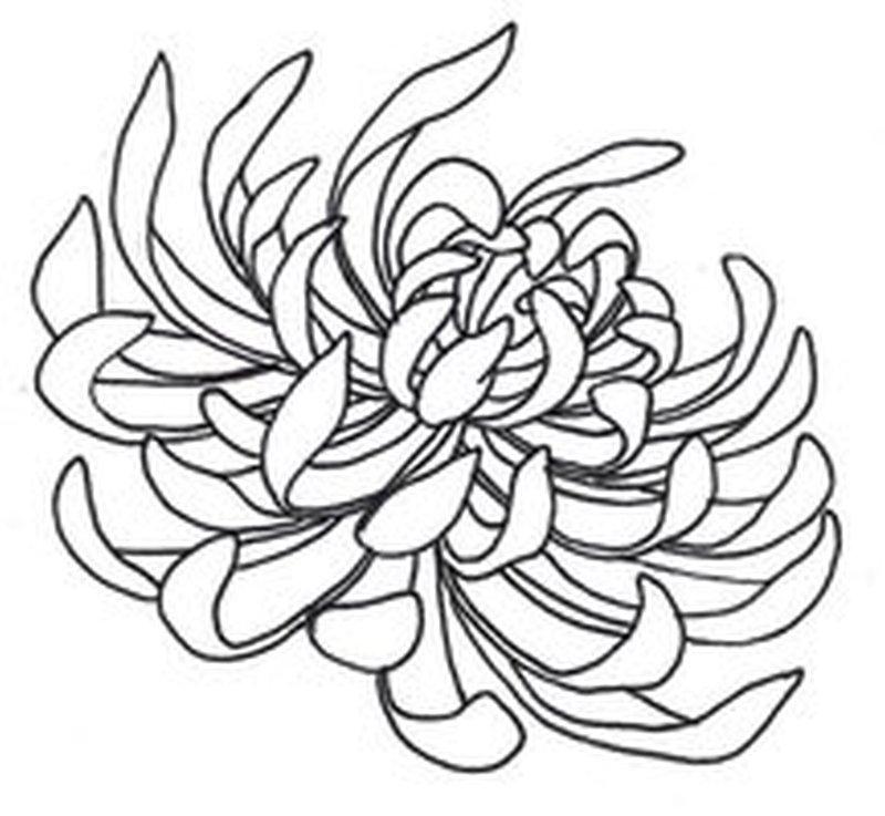 Spider chrysanthemum tattoo design 2