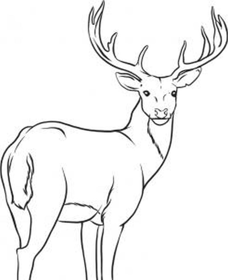 Standing deer tattoo sample