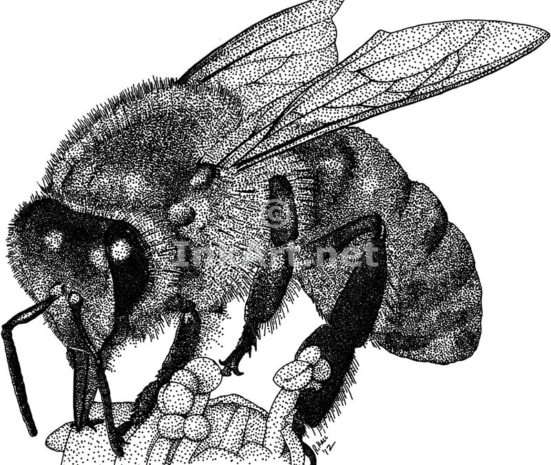 Western honey bee tattoo design