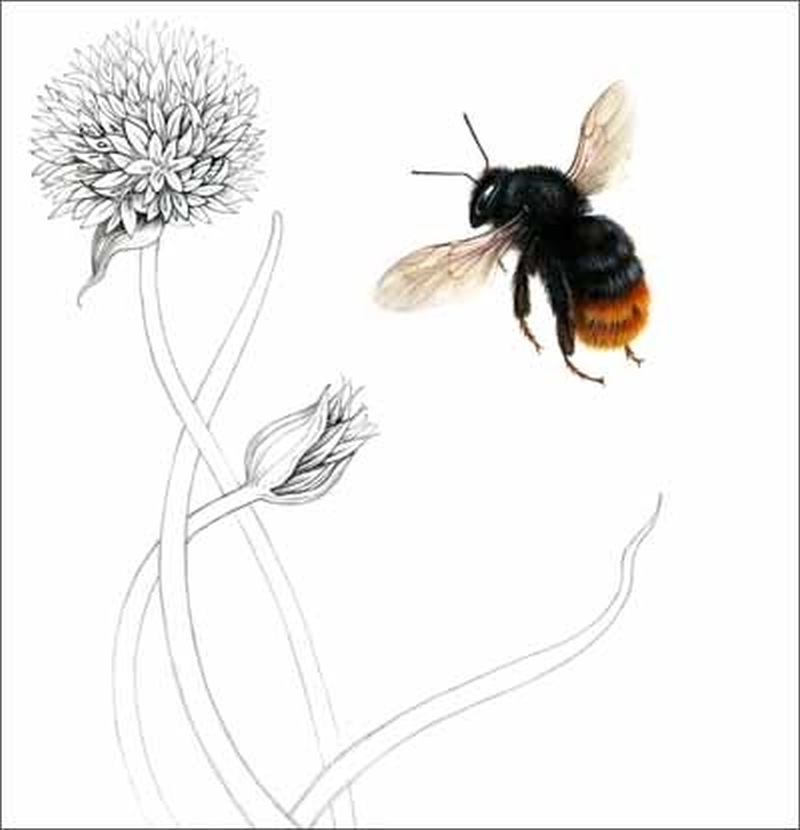 Wonderful flower bee tattoo design